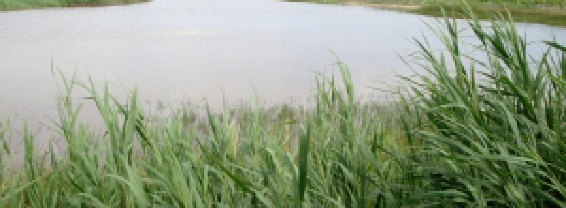 Fundacja Ochrony Wielkich Jezior Mazurskich chce stworzyć mapę ze strefami ciszy na Mazurach