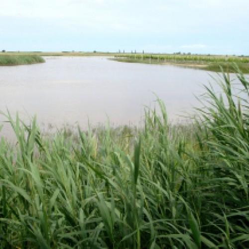 Niektóre kąpieliska w regionie zaatakowały sinice