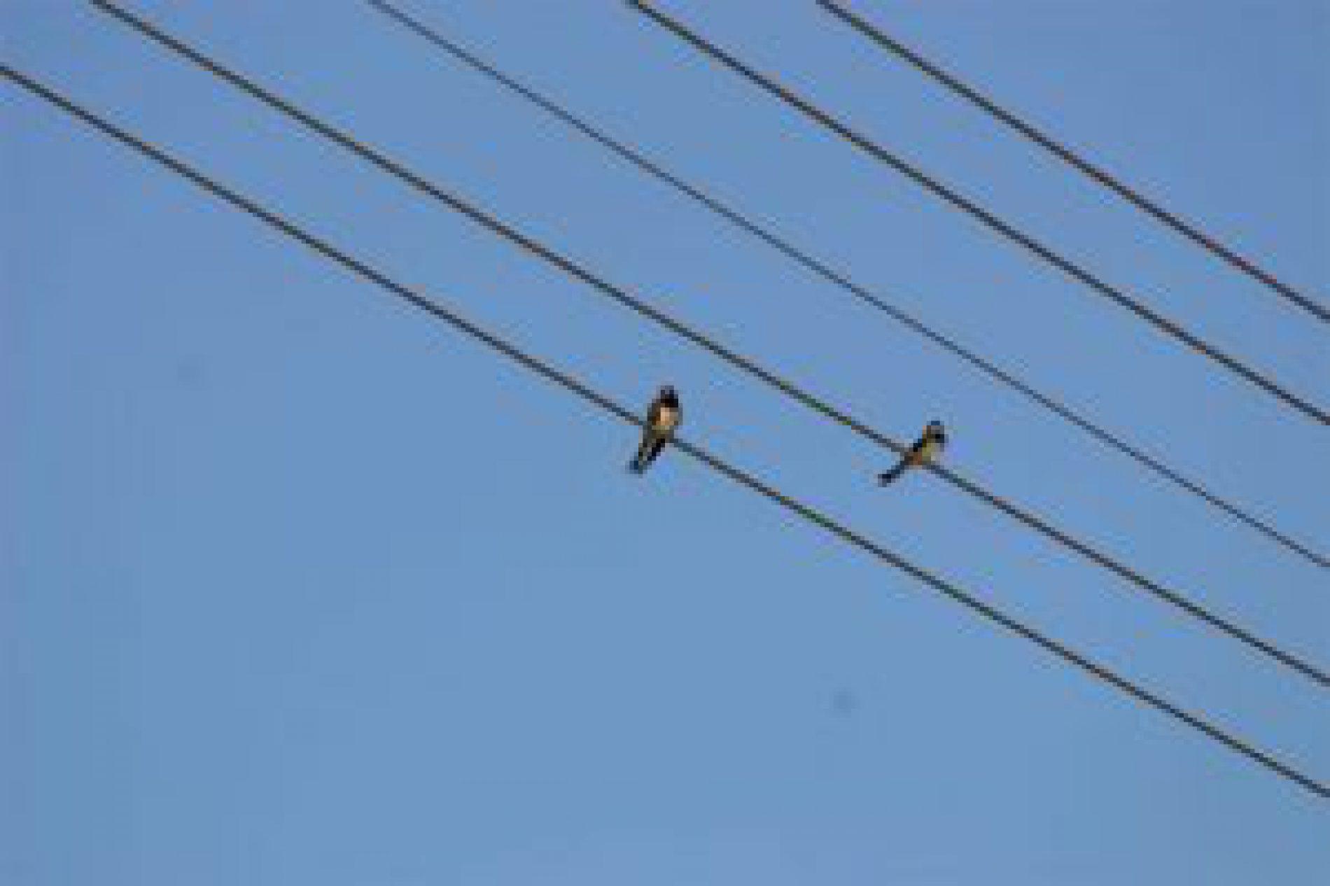 3,7 odbiorców w regionie zostało pozbawionych prądu