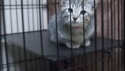 Mikołajki w olsztyńskim Schronisku dla Zwierząt