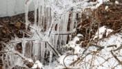 Ponad 30 turystów spędza weekend na zimowym obozowisku w Puszczy Boreckiej