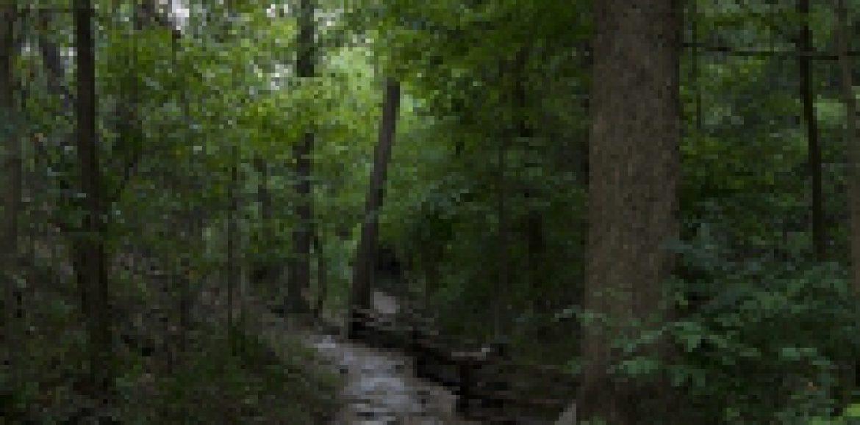 Leśnicy zachęcają do pomocy przy inwentaryzacji dzików