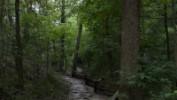 Przy drogach regionu powstaną parki leśne