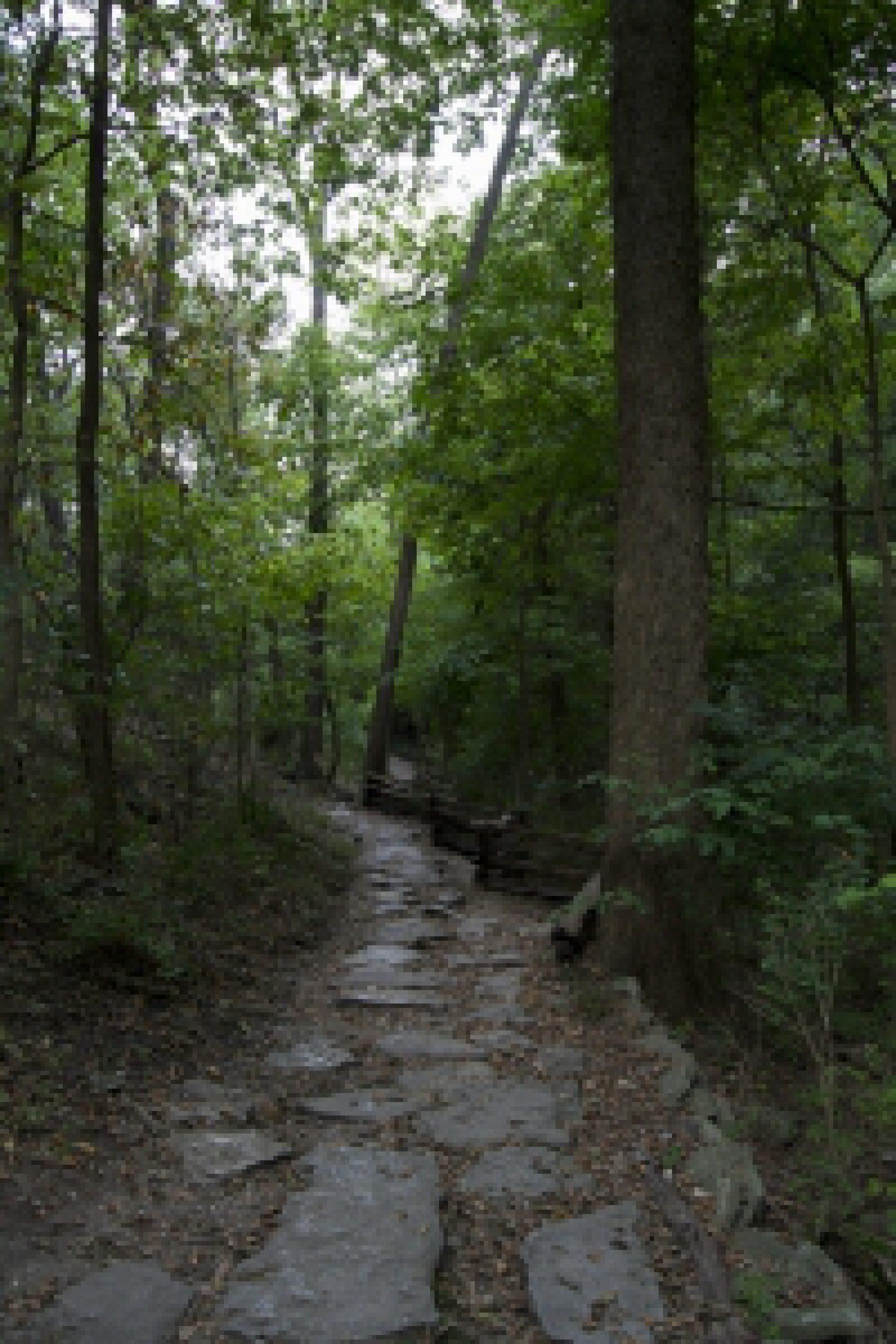 Archeolodzy zapraszają  na dzień otwarty w Lesie Miejskim