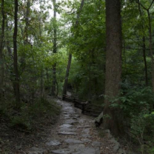 W Puszczy Rominckiej na Mazurach utworzono nowy rezerwat przyrody