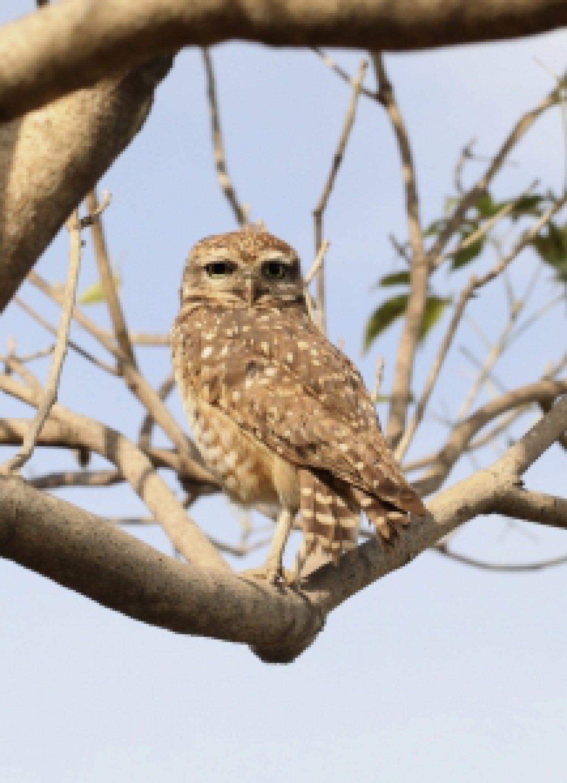 W Bukwałdzie otwarto nowy szpital dla ptaków