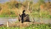 Wydano zgodę na odstrzał blisko 1200 kormoranów
