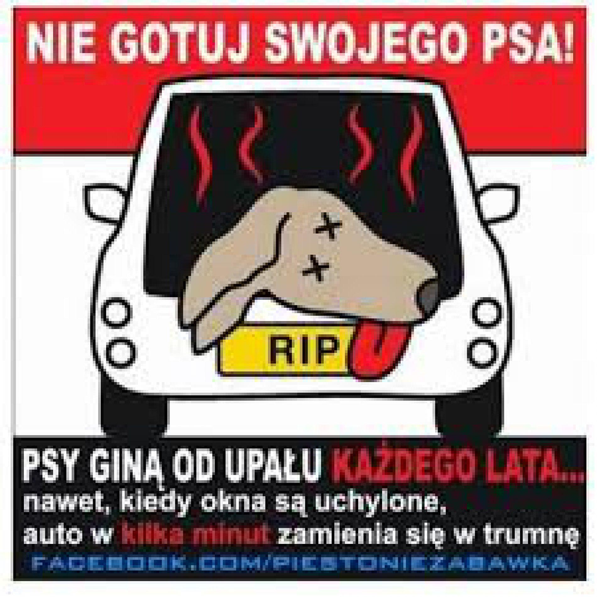 Mrągowo: Policjanci interweniowali w sprawie psa zamkniętego w rozgrzanym samochodzie