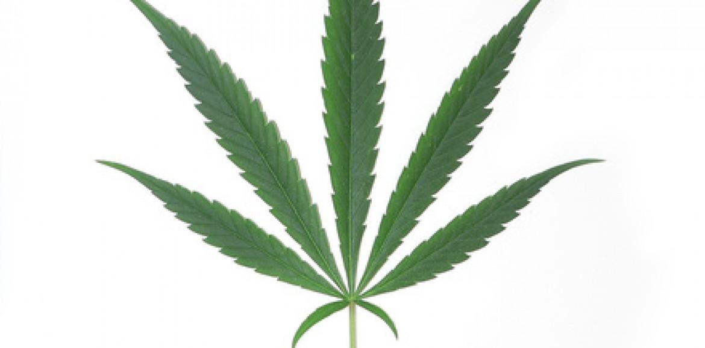 Szczytno: Zlikwidowano plantację marihuany