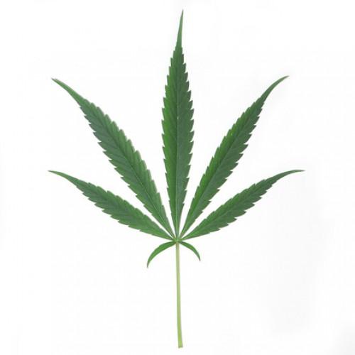 Palacze marihuany 5 razy częściej chorują na chorobę alkoholową