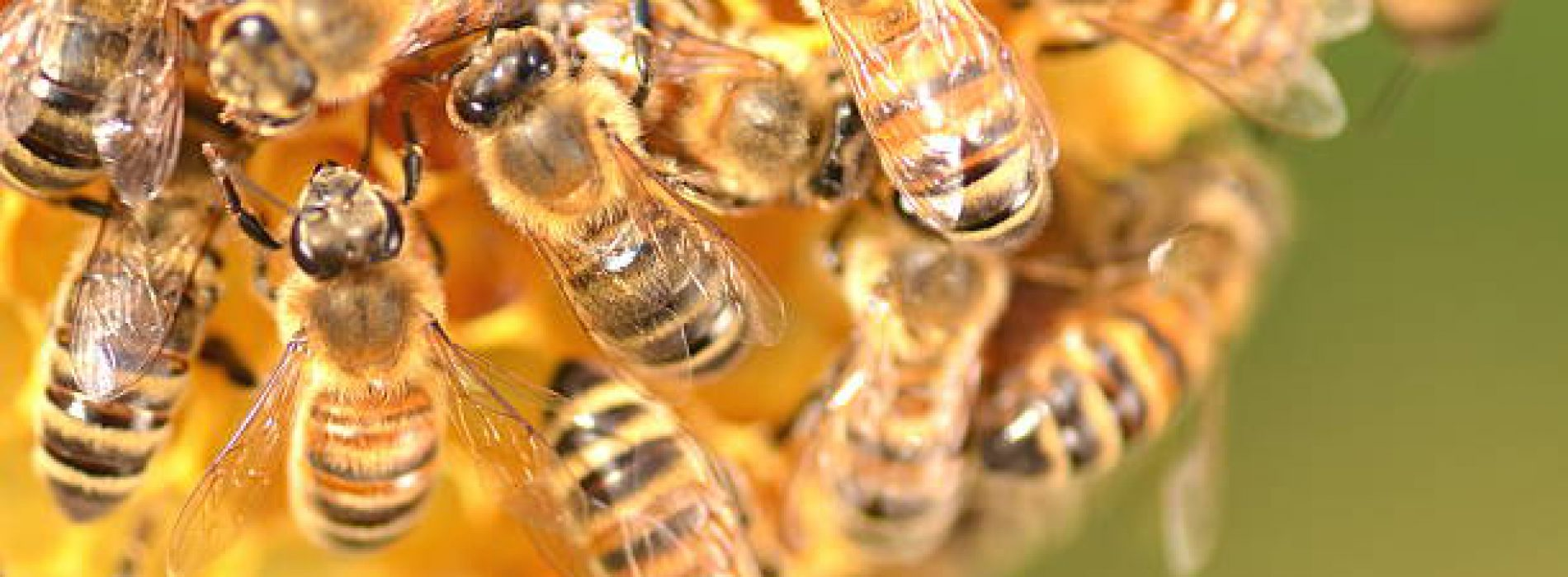 Maluchy w obronie pszczół